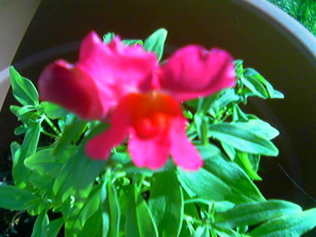 Première fleur en Bretagne...